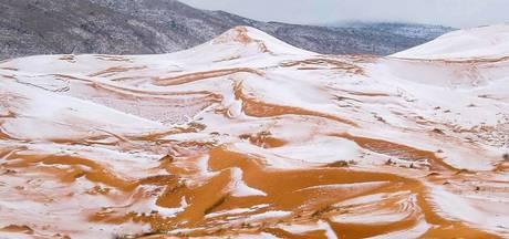 Sahara bedolven onder meter sneeuw