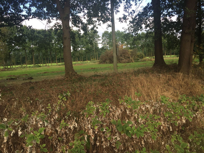 In de houtwal langs het perceel van het klooster is niet alleen gesnoeid, er zijn ook bomen geveld.