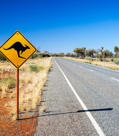 Australiër mept kangoeroe in gezicht om hond te redden