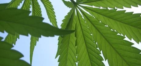 Oost Gelre wil discussie over medicinale wietolie