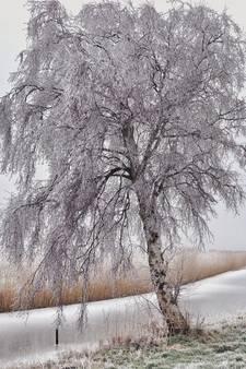 Winter Wonderland in het Groene Hart