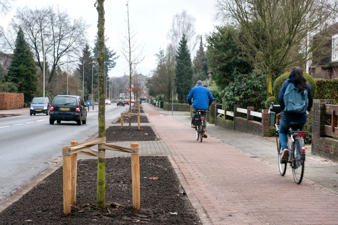 Bewoners aan de Huijghenslaan zijn niet blij met de kleine boompjes.