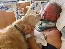 Hond beschermt zwaargewonde baas tegen vrieskou