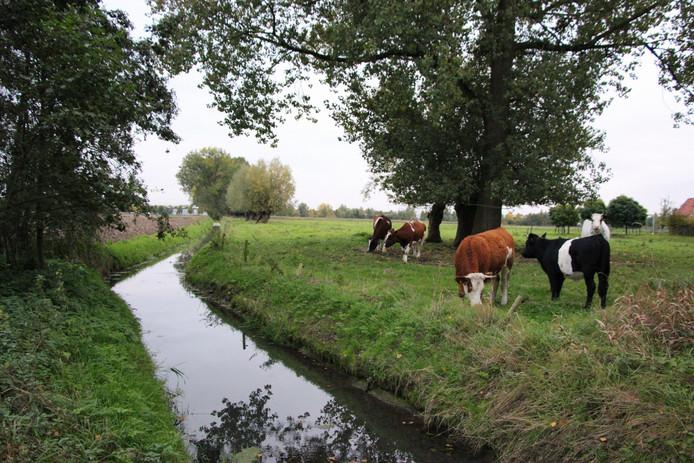 Het het terrein waar nu nog koeien grazen moet straks de opvang komen