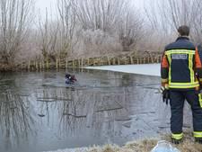 Brandweer redt bange hond van het ijs