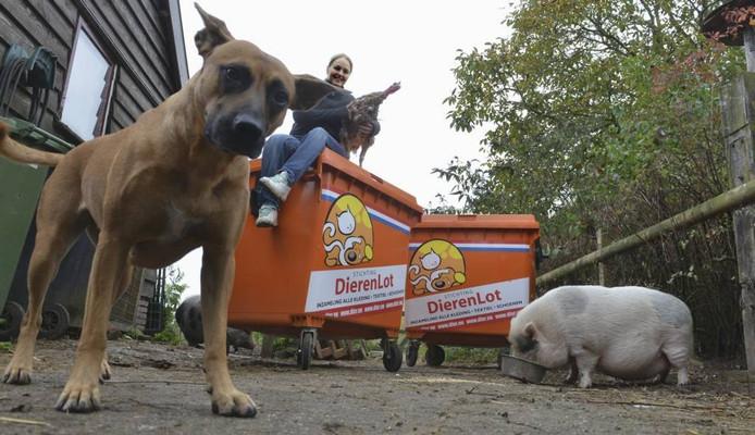 Hester Hoogland van de vogelopvang in Eck en Wiel op de gewraakte kledingontainers met kalkoen Kees, het zwijntje Bea en de hond Skittles. Foto: William Hoogteyling
