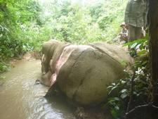 Olifanten in jungle Myanmar gevild voor Chinese markt