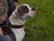 Nederlandse hond gekloond voor BNN-programma