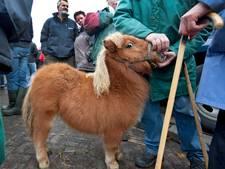 Dierenbescherming stopt met filmen 'paardenmishandeling'