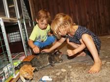 Gezin zet zwerfkatten in tegen muizenplaag