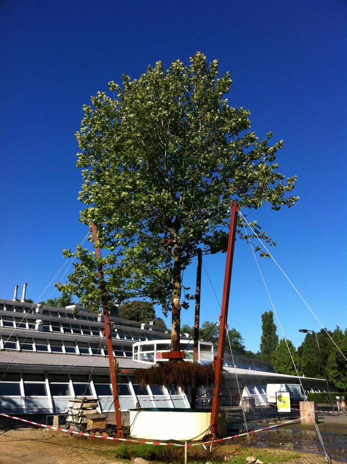 De boom eind augustus.