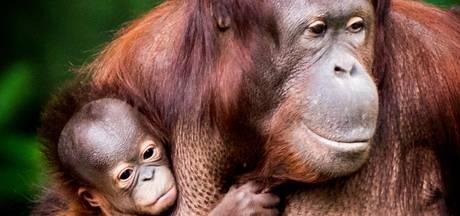 WNF luidt noodklok: Populatie wilde dieren drastisch gedaald