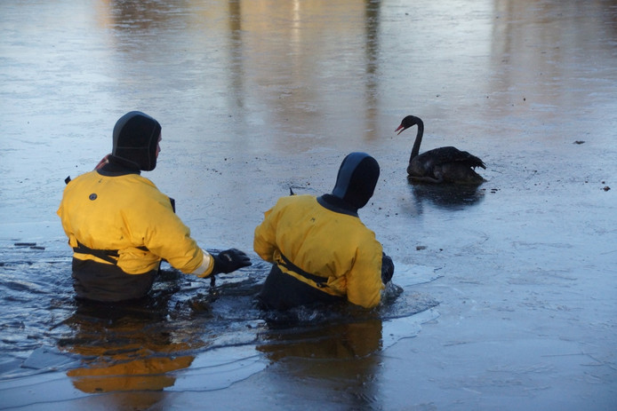 Brandweerlieden zijn onderweg naar de zwaan.