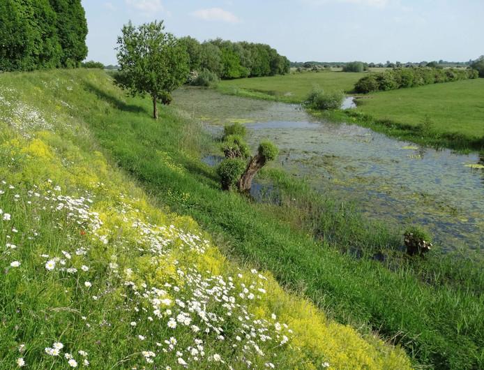 Oude rivierarm met bloemrijke dijk.