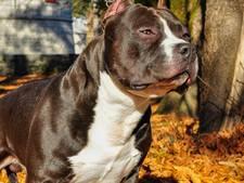 Bijtgrage hond in Beuningen in beslag genomen na nieuwe aanval