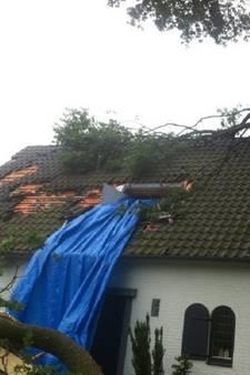 Vrouw op haar na geraakt door boom waar ze al jaren over klaagde