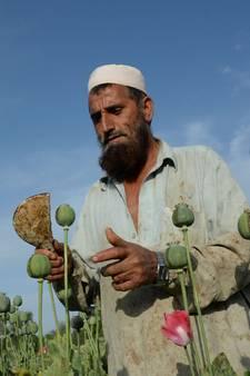 Rapport VN: Opiumproductie Afghanistan stijgt enorm