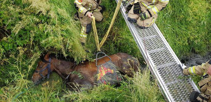 Het paard werd met een paardenbroek uit de sloot getild.