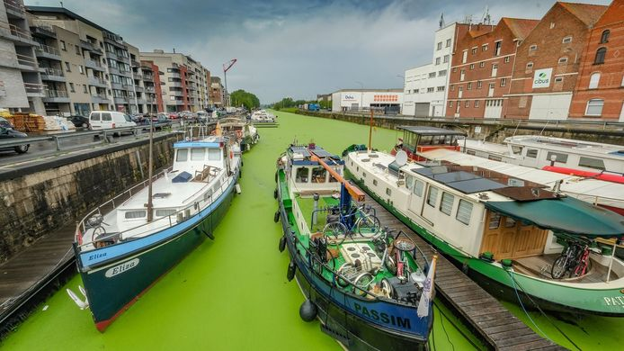 De Ieperse jachthaven kleurde de afgelopen weken regelmatig wel heel groen.