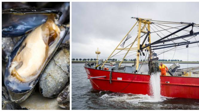 Weet wat je eet: waar komen de Zeeuwse mosselen op jouw bord echt vandaan?
