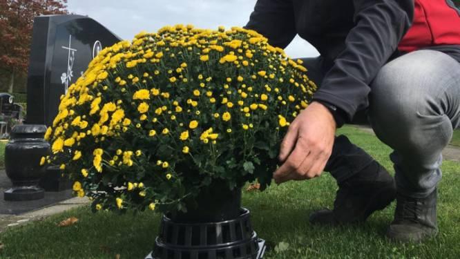 Gemeentebestuur stelt chrysantenhouders ter beschikking op begraafplaatsen