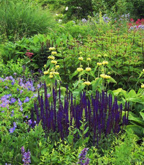 Avri komt met proef: planten meer kans geven door speciale bodemlaag