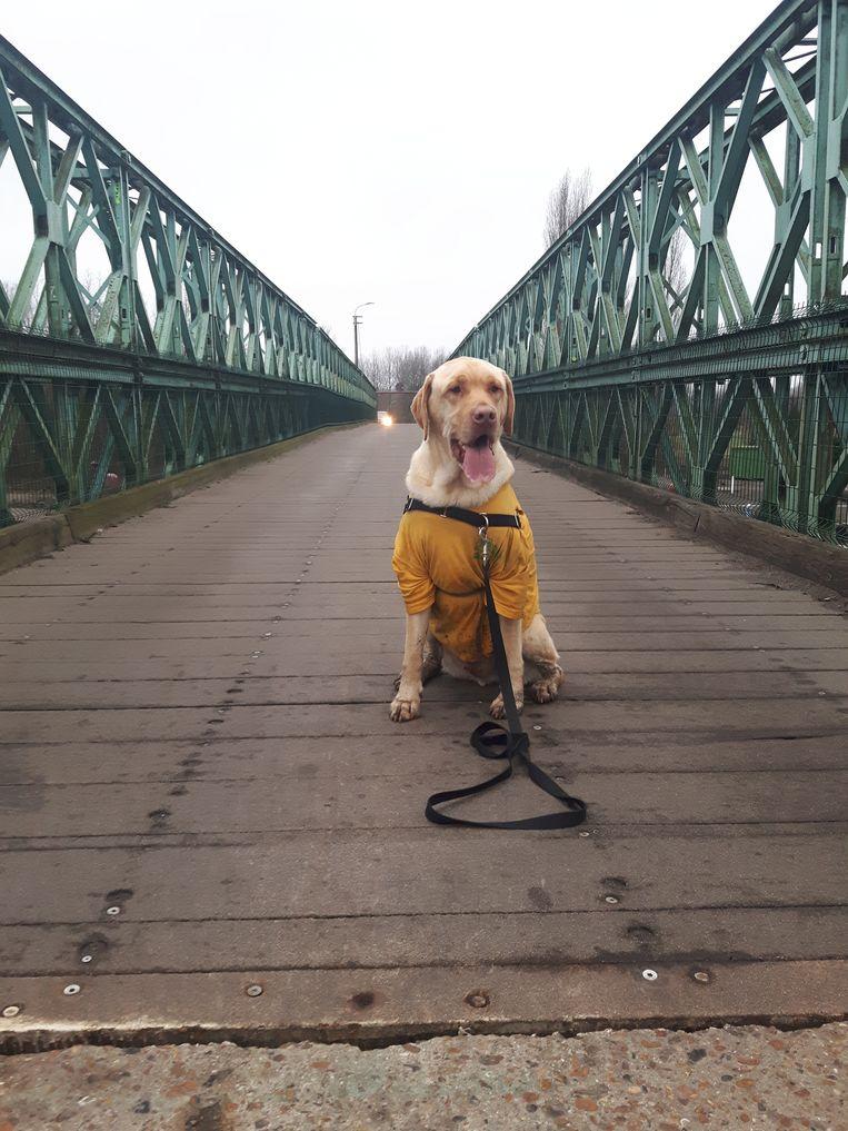 Hond Pippin van verzorger Bart loopt op 22 december mee en Pippin kan je sponsoren om zo geld in te zamelen voor De Zonnegloed.