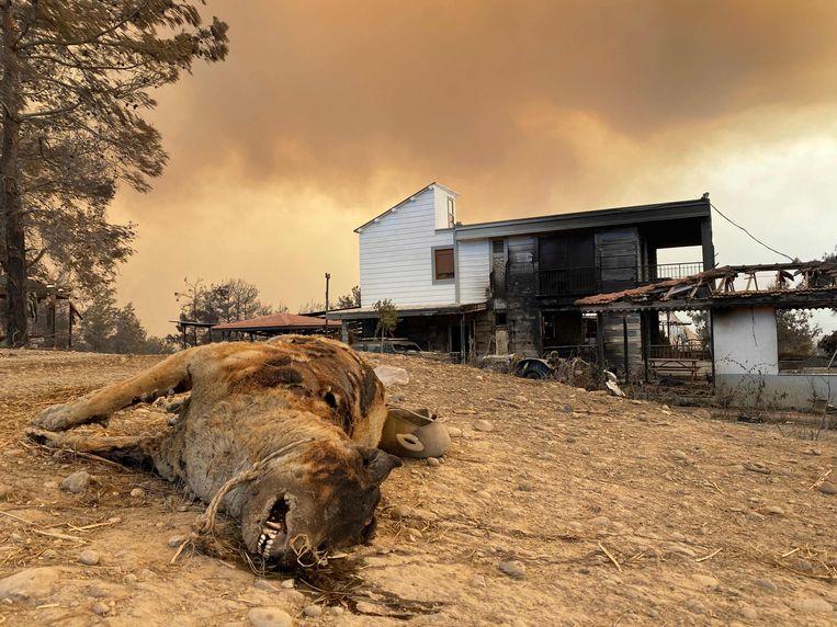 De overblijfselen van een verbrand dier vlakbij Manavgat. Beeld AFP
