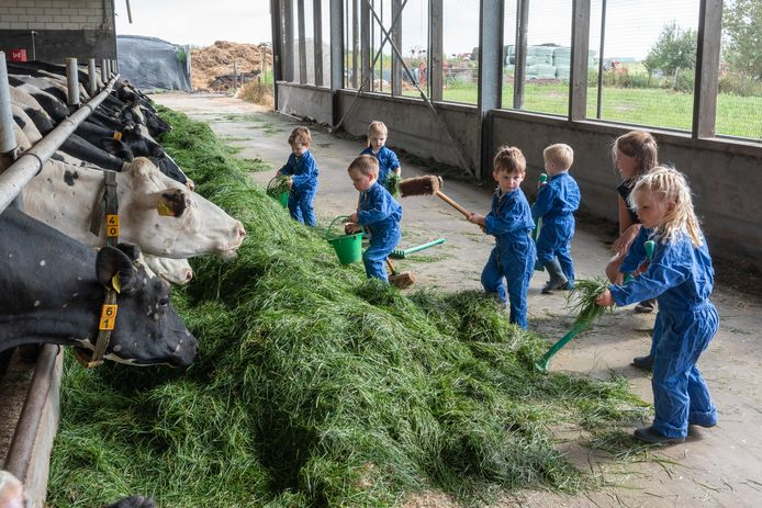 Kindjes voeren de koeien op De Boerderij in Soest.