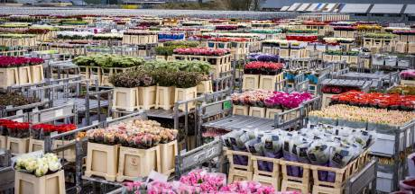 Royal FloraHolland lijdt verlies van 'slechts' 6 miljoen euro: 'Trots op enorme veerkracht van onze sector'