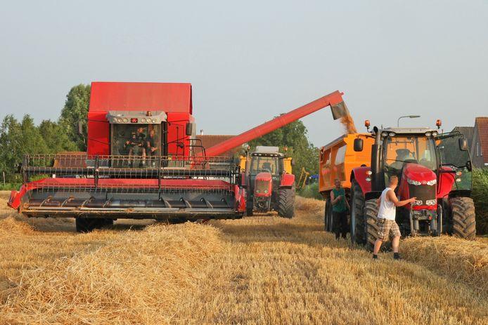 Oogst van tarwe met een combine. De landbouwer wil op een perceel tarwe alleen tarwe, logisch dat daar de biodiversiteit lager is. Foto ter illustratie
