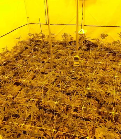 Wietkwekerij met 48 planten ontmanteld in Ewijk