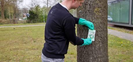 Injectie in bomen Son moet nekslag processierups zijn