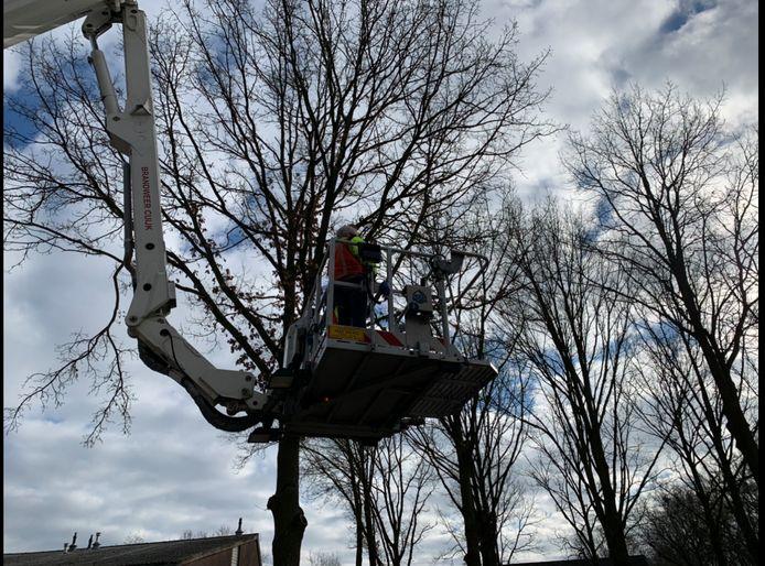 Medewerkers van de Dierenambulance halen de vogel uit de boom.
