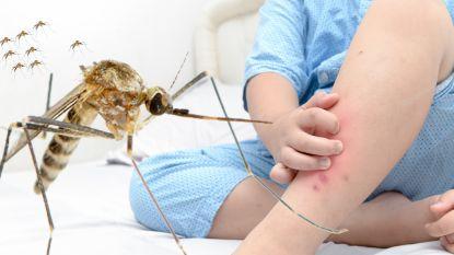 Warme weer zorgt voor veel muggen met enorme bloedhonger