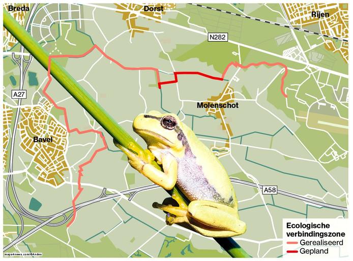 Boomkikker krijgt een groene snelweg in West-Brabant Infographic BN DeStem