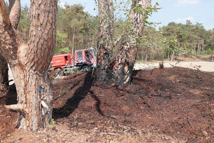 Zwartgeblakerde struiken en een boomstam na de natuurbrand in de zandverstuiving bij Ommen.
