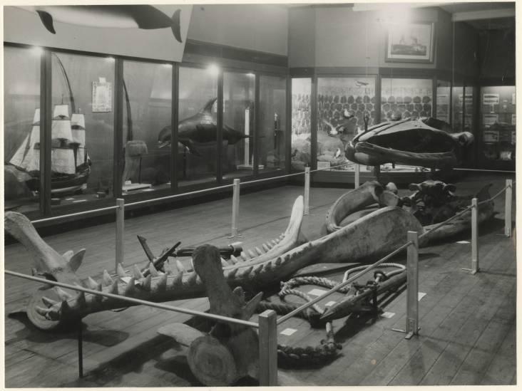 De muffe lucht en krakende planken: 'Een mammoet heeft daar nooit gestaan'