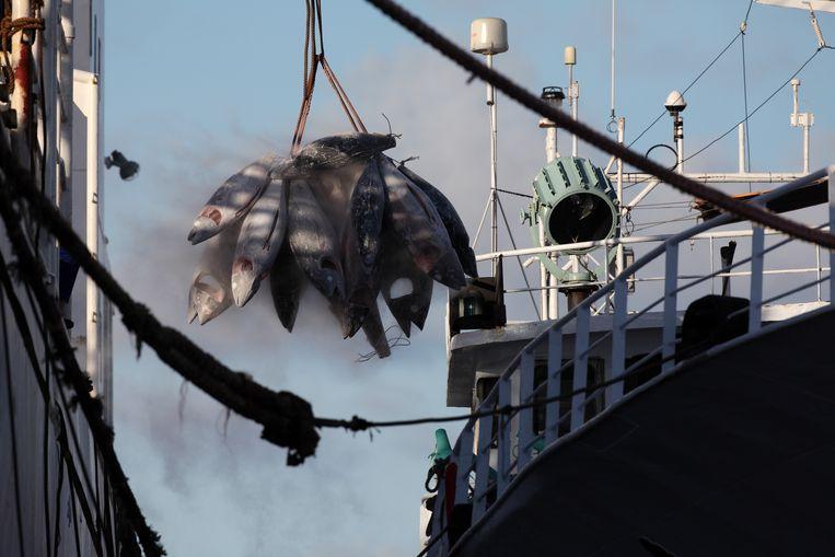 'Tonijnen zijn de leeuwen van de zee, en leeuwen eten we toch ook niet? Hoe lager de vis in de voedselketen, hoe beter: de mosselkweek is vaak zelfs góéd voor het ecosysteem.' Beeld © Jiri Rezac / Greenpeace