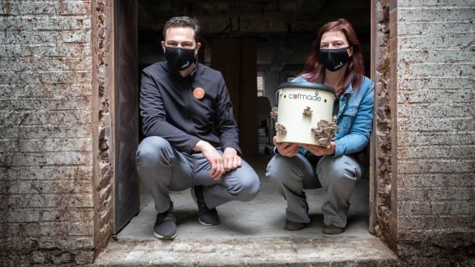 Van koffiedrab naar oesterzwammen: Citamine start kwekerij in De Potterij