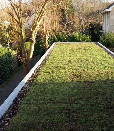 Het dak op voor een groenere stad: Den Haag zoekt dakcoaches