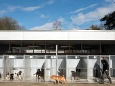 Dierenasiel Harderwijk mag blijven, maar krijgt wel 'blafschermen' tegen hondenherrie