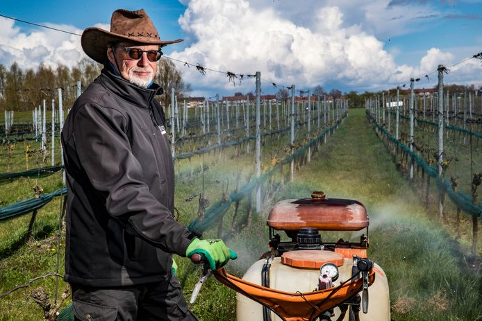 Fruittelers in de regio doen er alles aan om ervoor te zorgen dat de fruitbomen niet bevriezen. Ook wijnboer Luud Paulissen treft zijn maatregelen.