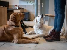 L'ASBL Entrevues à besoin de vous: devenez foyer d'accueil pour un chien guide