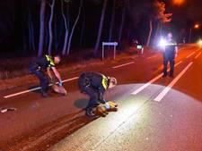 14 zwijnen overlijden na aanrijding in Valkenswaard, automobilist ongedeerd