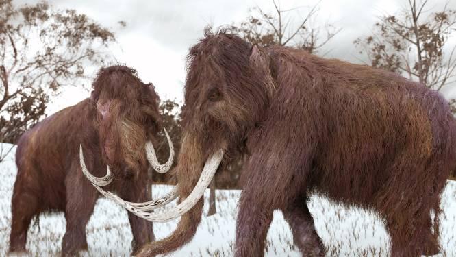 Oudste DNA ooit ontcijferd afkomstig van 1,2 miljoen jaar oude mammoet