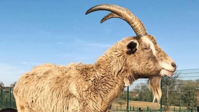 Baronneke, de dierenburgemeester van Vlaams-Brabant 2020, is overleden