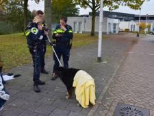 Verdwaalde hond uit het koude water gered door agent in de Tilburgse Reeshof