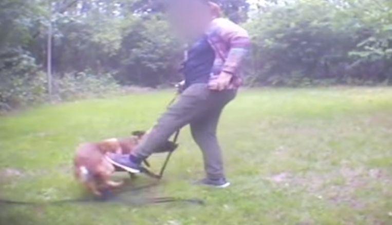 Een vrouw trapt een hond.