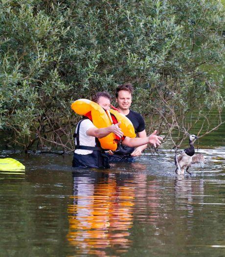 Brandweerlieden te water om verstrikte eend uit vislijn te redden in Wierdense vijver